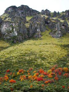 Shrubs changing colors in the high Andes