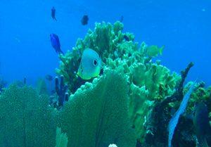 Marine Biology Belize