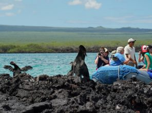 TCS Students photograph flightless cormorants in the Galapagos
