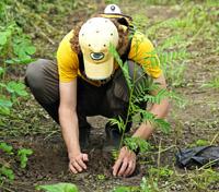 Agroforestry Planting