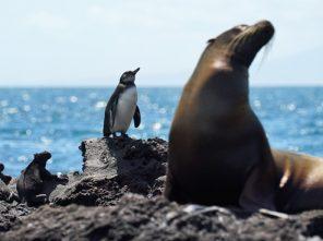 Marine Iguana, Galapagos Penguin, Galapagos Sea Lion
